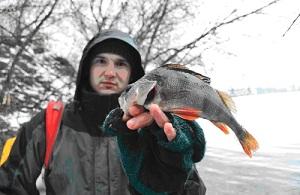 Ловля окуня спиннингом зимой на воблеры-выбор места,приманки