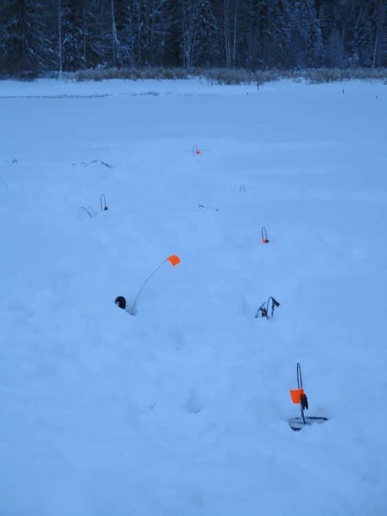 Ловля на жерлицы зимой на незнакомом водоёме